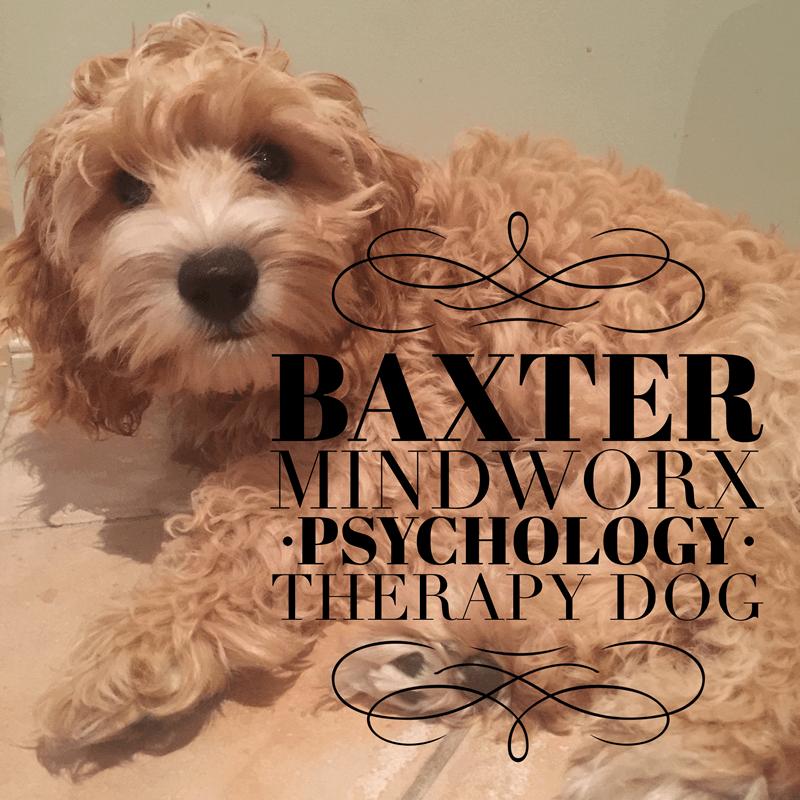 Baxter, Mindworx Therapy Dog